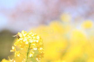 近くの花のアップの写真・画像素材[1174322]
