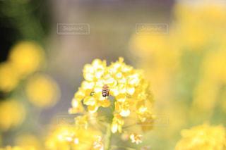 近くの花のアップの写真・画像素材[1174323]