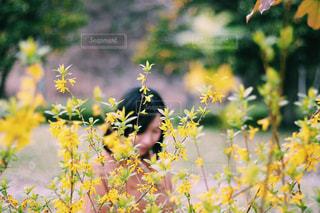 近くの花のアップの写真・画像素材[1174324]