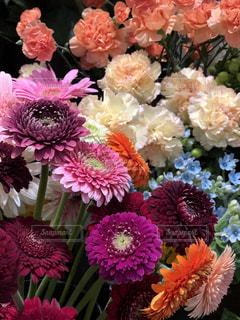 花のアップの写真・画像素材[1203304]