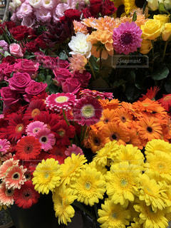 近くの花のアップの写真・画像素材[1203305]