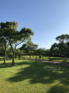 芝生のフィールドの写真・画像素材[1223959]