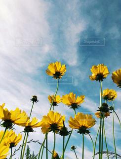 水と黄色い花で一杯の花瓶の写真・画像素材[1224007]