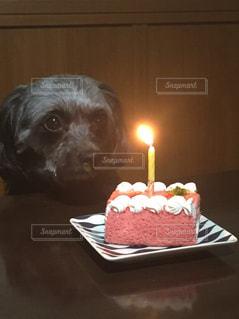 バースデー ケーキの前に座っている犬の写真・画像素材[1450725]