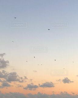 空を飛んでいる鳥の群れの写真・画像素材[1553313]