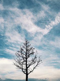 木と雲の写真・画像素材[1553315]