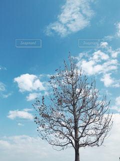 木と雲の写真・画像素材[1553316]