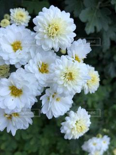 近くの花のアップの写真・画像素材[1636904]