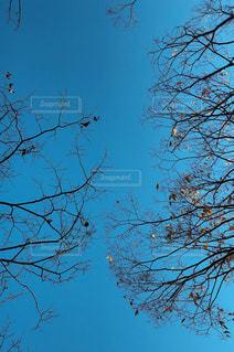 木の上に座っている鳥の群れの写真・画像素材[1636907]