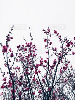 木の花の花瓶の写真・画像素材[1836371]