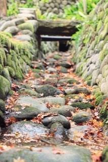 岩の隣にあるブロッコリーの群れの写真・画像素材[2789955]
