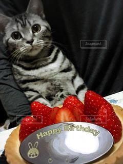 皿の上に座っている猫の写真・画像素材[2331831]