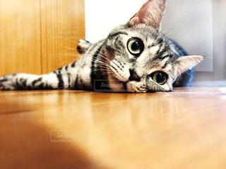 木製のテーブルの上に座っている猫の写真・画像素材[2332055]