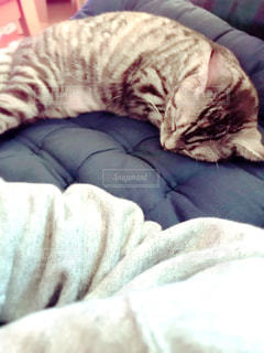 ベッドに横たわる猫の写真・画像素材[2332166]