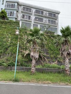 道路の脇のヤシの木と建物の写真・画像素材[2335737]