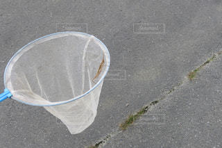 虫採りの写真・画像素材[2331962]