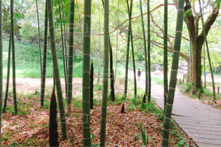 木のクローズアップの写真・画像素材[2341805]