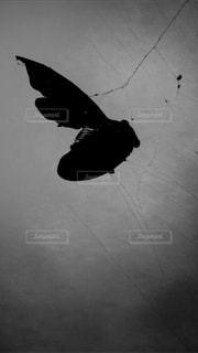 セミの一生の写真・画像素材[2344733]