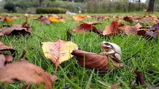 草の上のカエルの写真・画像素材[2332046]