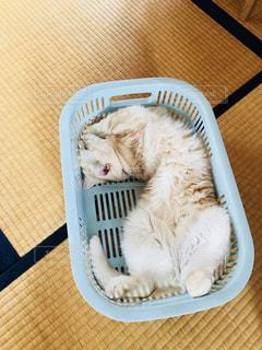 猫の開きの写真・画像素材[2334551]