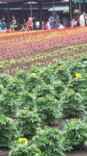 お花畑の写真・画像素材[2333223]