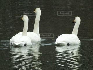 自然の写真・画像素材[90584]