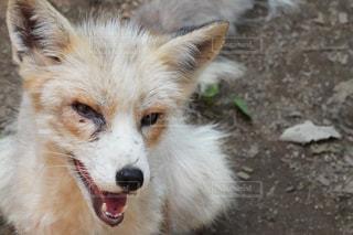 犬のクローズアップの写真・画像素材[2333499]