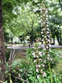 公園の緑の写真・画像素材[2344566]