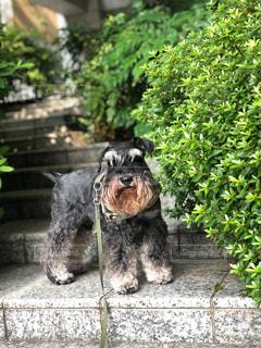 庭の小さな犬の写真・画像素材[2344595]