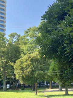 公園の大きな木の写真・画像素材[2349507]