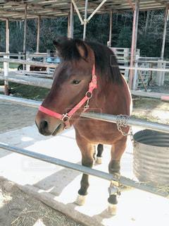 フェンスの隣に立っている茶色の馬の写真・画像素材[2334261]