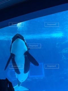 水族館の写真・画像素材[2334614]