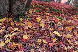 カラフル落ち葉の写真・画像素材[2334877]