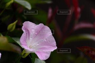 雨上がりの写真・画像素材[2362685]