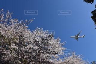 飛行機と青空と桜の写真・画像素材[3206567]