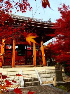 秋深き赤く染まるの写真・画像素材[2337327]