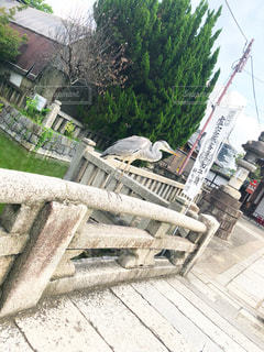 橋にとまるサギの写真・画像素材[2337405]