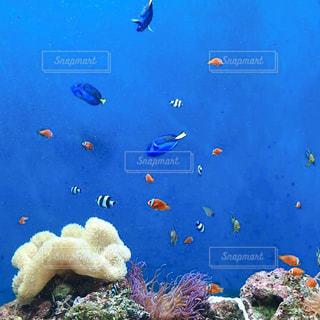 小さなサンゴ礁の写真・画像素材[2351562]