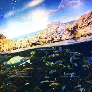 under the seaの写真・画像素材[2356082]