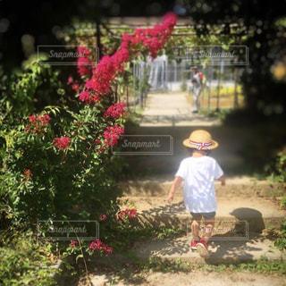 庭に立っている小さな女の子の写真・画像素材[2378666]