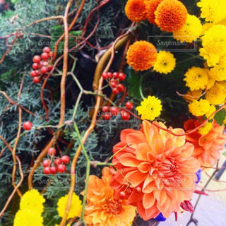 花のクローズアップの写真・画像素材[2380978]