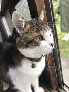 窓の前に座っている猫の写真・画像素材[2437351]