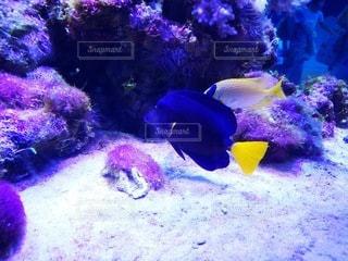 水の中の魚の群しの写真・画像素材[2338648]