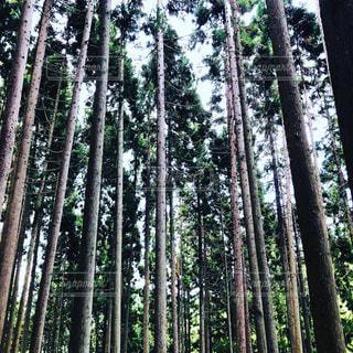 森の真ん中の木の写真・画像素材[2340577]
