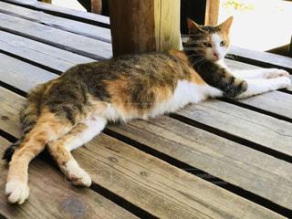木製のベンチの上に横たわる猫の写真・画像素材[2340725]