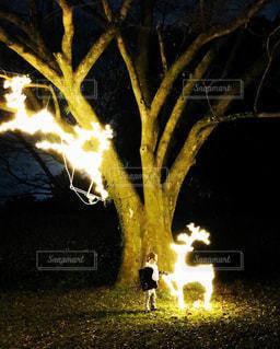 京都府立植物園のクリスマスイルミネーションの写真・画像素材[2343982]