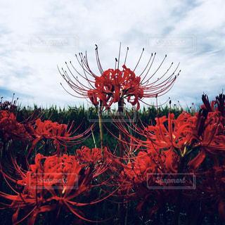 花のクローズアップの写真・画像素材[2447321]