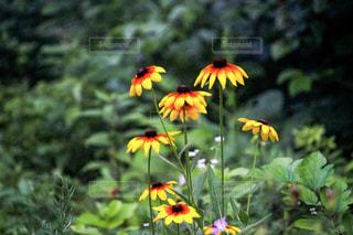 綺麗な花の写真・画像素材[2338605]