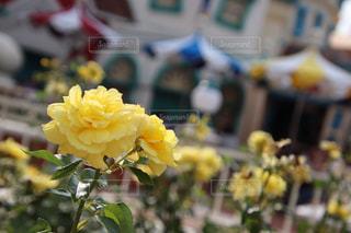 黄色いお花の写真・画像素材[2338655]