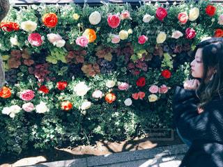 薔薇を見る女性の写真・画像素材[2488985]